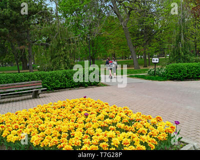 Queen's Park, Toronto, with spring tulips in bloom - Stock Photo