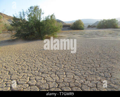 Dried out river bed (wadi) in Negev desert of Israel around the Dead Sea. With some green bushes. - Stock Photo