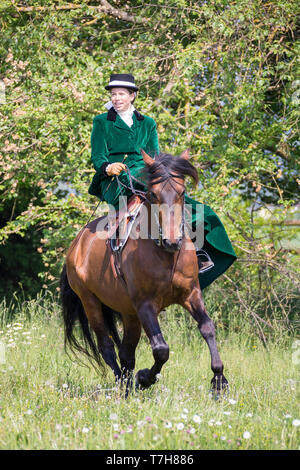 Pura Raza Espanola, Andalusian. Rider with costume and sidesaddle galloping on a meadow. Switzerland - Stock Photo