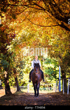 Pure Spanish Horse, PRE, Andalusian Horse. Rider with bay stallion on a path in autumn. Germany - Stock Photo