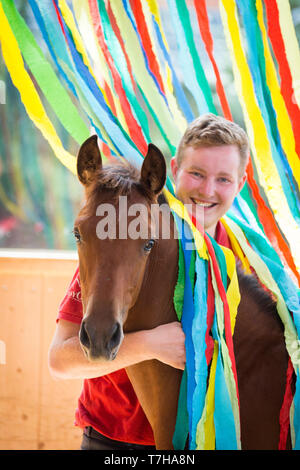 Iberian Sport Horse. Young man with bay foal among colourful ribbons. Part of training to accept unusual things without fear. Germany - Stock Photo