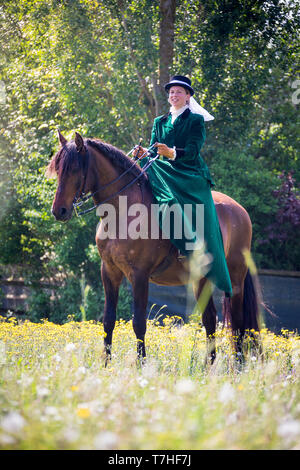 Pura Raza Espanola, Andalusian. Rider with costume and sidesaddle standing on a meadow. Switzerland - Stock Photo