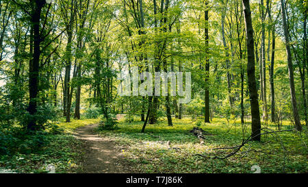 Path Through The Woods: Forest in Tiergarten Park In Berlin, Germany In Spring, Landscape Background - Stock Photo