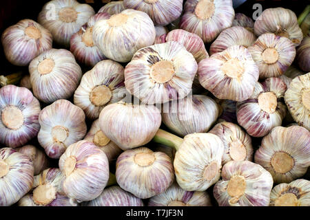 Fresh garlic at a vegetable and fruit market stall on a farmers market in France - Stock Photo