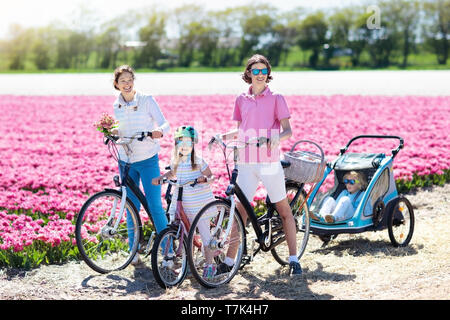 Happy Dutch family riding bicycle in tulip flower fields in Netherlands. Mother and kids on bikes at blooming tulips in Holland. Baby in bike trailer. - Stock Photo