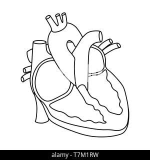 Vector illustration of Heart - Part of Human Organic. - Stock Photo