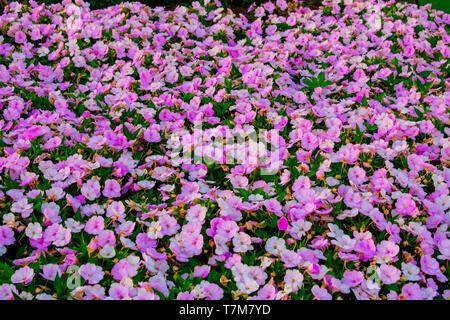 Orlando, Florida. April 02, 2019. Beautiful flowers at Magic Kingdom Park in Walt Disney World . - Stock Photo