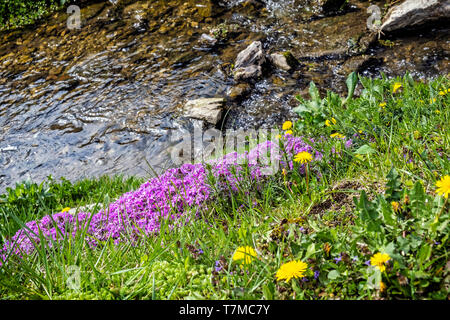Blooming flowers and creek, Cicmany village, Slovak republic. Travel destination. Seasonal natural scene. - Stock Photo