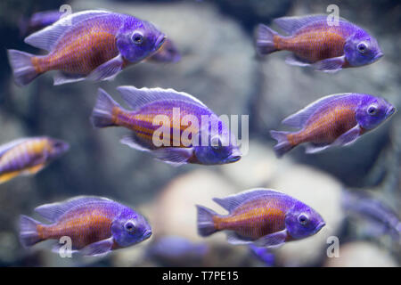 Background image of a lot of fish in the water - Stock Photo