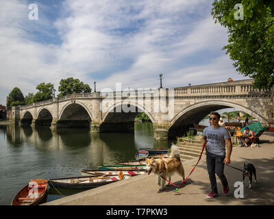 RICHMOND UPON THAMES:  Man walking dogs by the Bridge over the River Thames - Stock Photo