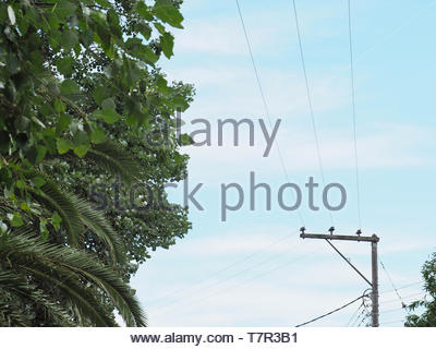 A grid view ,electric current cables - Stock Photo