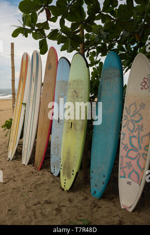 A row of multi-coloured surf long boards lined up for hire on a beach at Puerto Viejo de Talamanca in Costa Rica with an overcast sky in the background, portrait aspect - Stock Photo