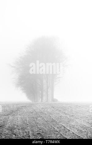 A stand on bare winter trees in an empty field in heavy fog in Northumberland, creating an eerie yet peaceful atmosphere. - Stock Photo