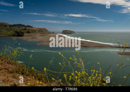 The Russian River meets the Pacific Ocean at Jenner Heads, with bright yellow flowers in the foreground and bright blue skies