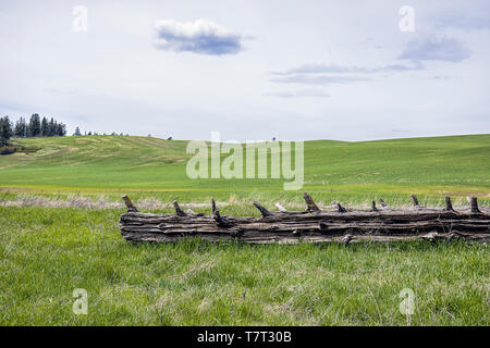 A fallen log lays in the foreground of a large grassy field in eastern Washington. - Stock Photo