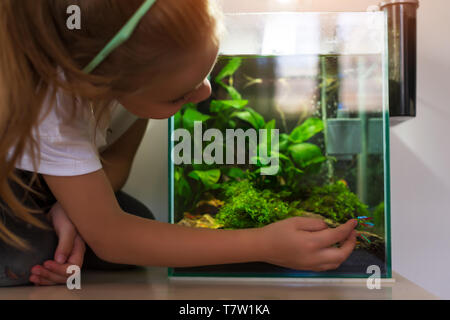 Cute little girl looking at fish in nano aquarium - Stock Photo