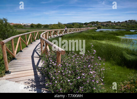 The curving wooden walkway with people on it over the Lagoon at Fuente de Piedra, with Grasses blowing in the wind and purple Wildflowers. Spain. - Stock Photo