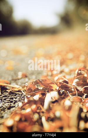 Fallen leaves on the edge of a highway in Spain. - Stock Photo