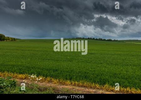 Heavy weather over the Hertfordshire countryside near Ashwell in the UK. Heavy grey skies and green arable land. - Stock Photo