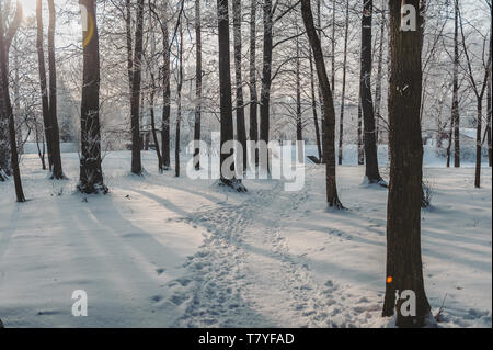 The sun's rays break through the branches of a tree. Frozen park in winter under snow. Latvia. Baltic. - Stock Photo