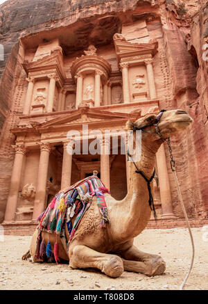 Camel in front of The Treasury (Al-Khazneh), Petra, UNESCO World Heritage Site, Ma'an Governorate, Jordan, Middle East - Stock Photo