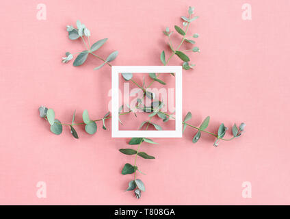 Eucalyptus branches and square white frame on rose colored canvas background. - Stock Photo
