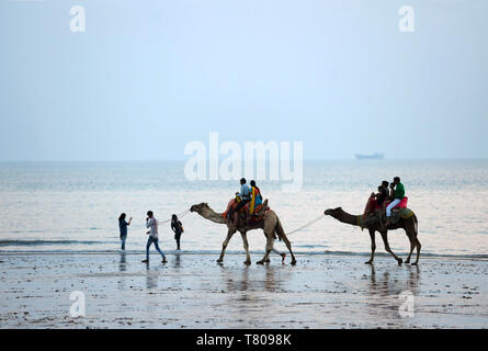 Diwali holidaymakers taking camel rides along the shore at sunset, Mandvi, Gujarat, India, Asia - Stock Photo
