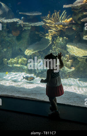 Apple Valley, Minnesota. Minnesota zoo. One and a half year old bi-racial girl looking at the fish in the aquarium at the tropical reef. - Stock Photo