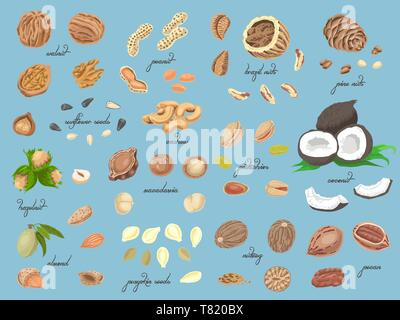 Big collection of isolated colored nuts and seeds. Vector illustration for your design - Stock Photo