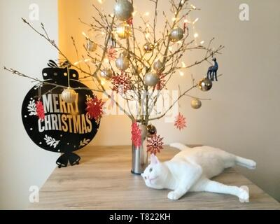 sweet white cat and christmas tree light holiday - Stock Photo