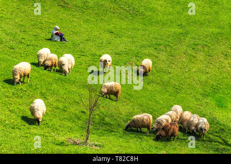 Old woman resting on the ground while sheep grazing on green meadow - Stock Photo