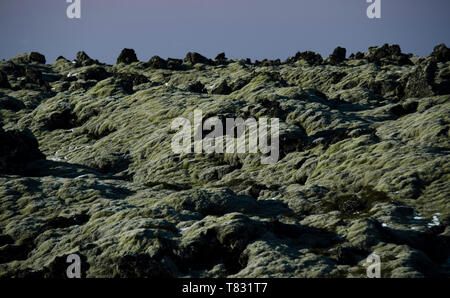 Huge old lava fields overgrown with Icelandic moss in an open-air emerald color. Iceland, moss and musk landscape in a typical cloudy day - Stock Photo