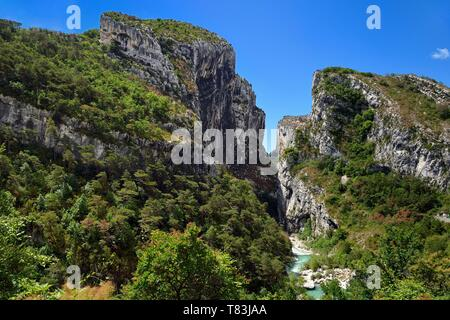 France, Alpes de Haute Provence, Parc Naturel Regional du Verdon, Rougon, Grand Canyon of Verdon in the corridor Samson and the beginning of the trail sentier Blanc Martel on the GR4 - Stock Photo