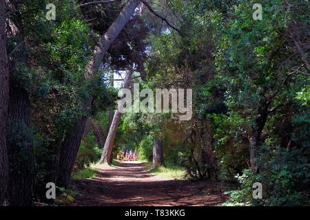 France, Alpes Maritimes, Lerins Islands, Sainte Marguerite island - Stock Photo