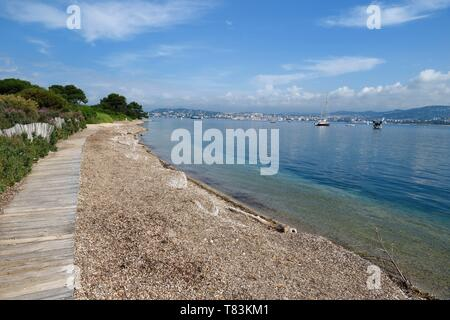 France, Alpes Maritimes, Lerins Islands, Sainte Marguerite island, the Bateguier beach covert by posidonia - Stock Photo
