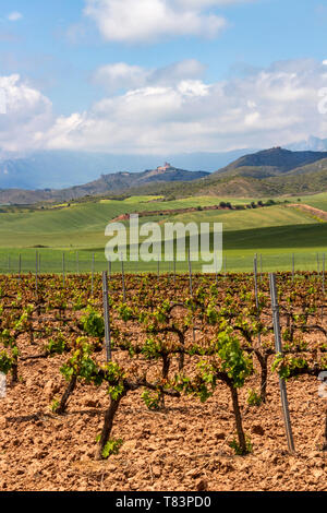 May vineyards in the foreground, Basilica of San Gregorio Ostiense in the background on the Camino de Santiago, Way of St. James in Navarre, Spain - Stock Photo