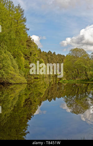 MILLBUIES LOCH AND COUNTRY PARK ELGIN MORAY SCOTLAND  SPRINGTIME TREES AND BLUE SKY REFLECTED IN THE WATER - Stock Photo