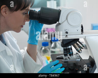 Medical testing of variety of human samples including blood and tissue under microscope in laboratory - Stock Photo