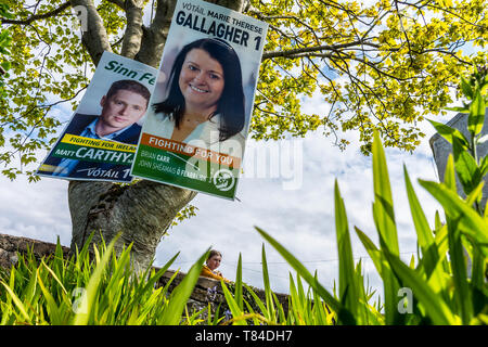 Burtonport, County Donegal, Ireland. 10th May 2019. Election posters for Sinn Fein on a tree in an area traditionally strong for the party. The EU elections will take place on Friday 24th May 2019 in Ireland. Local elections will be held on the same day, as will a referendum on divorce laws. Credit: Richard Wayman/Alamy Live News - Stock Photo
