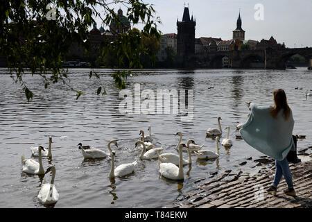 Prague, Czech Republic. 10th May, 2019. Woman feeding birds on the river Vltava in Prague in the Czech Republic. Credit: Slavek Ruta/ZUMA Wire/Alamy Live News - Stock Photo