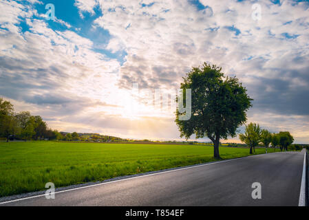 Long asphalt road with trees on the side, along agricultural fields, at sunset, near Schwabisch Hall, Germany. Street with no people and no cars. - Stock Photo