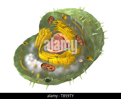 Animal cell, illustration - Stock Photo