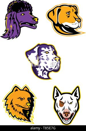 Mascot icon illustration set of heads of a poodle, pomeranian, great Dane, labrador retriever, and bull terrier viewed from side  on isolated backgrou - Stock Photo