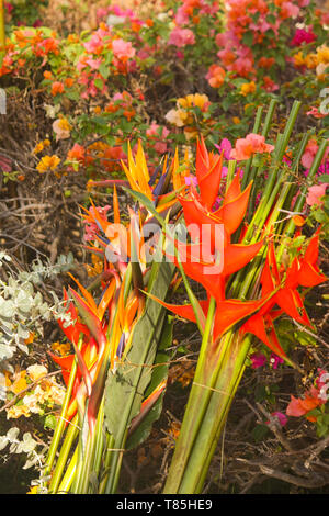 Fresh Cut Tropical Flowers for Sale - Stock Photo