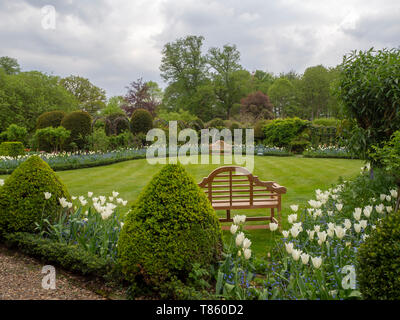 Chenies Manor Gardens Spring fresh in early May; lawn, garden bech seats, topiary and White Triumphator tulip borders. - Stock Photo