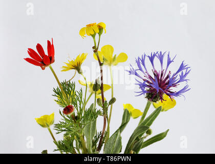 Wild flowers seen in rural areas in the spring - Stock Photo