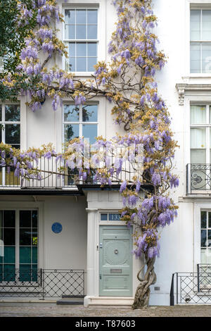 Wisteria on a house in Old Church Street, Chelsea, London, England - Stock Photo