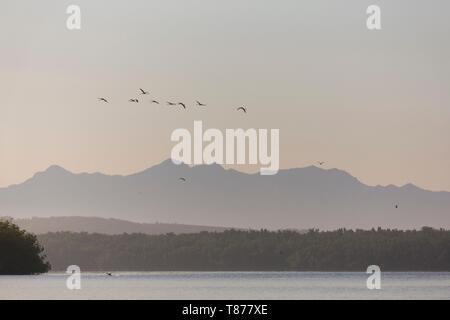 Cuba Province of Cienfuegos Cienfuegos, the Reserve Laguna de Guanaroca, Flamingo - Stock Photo