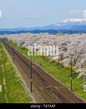 Miyagi, Japan - April 14, 2019. Cherry blossom with Zao Mountain Range background in Miyagi, Japan. - Stock Photo