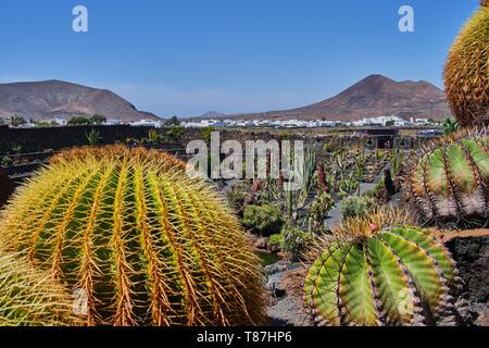 Guatiza, Lanzarote, Spain April 28, 2019: View over arrangement of cactus at Cactus Garden -Jardin de Cactus- situated in the village of Guatiza on th - Stock Photo